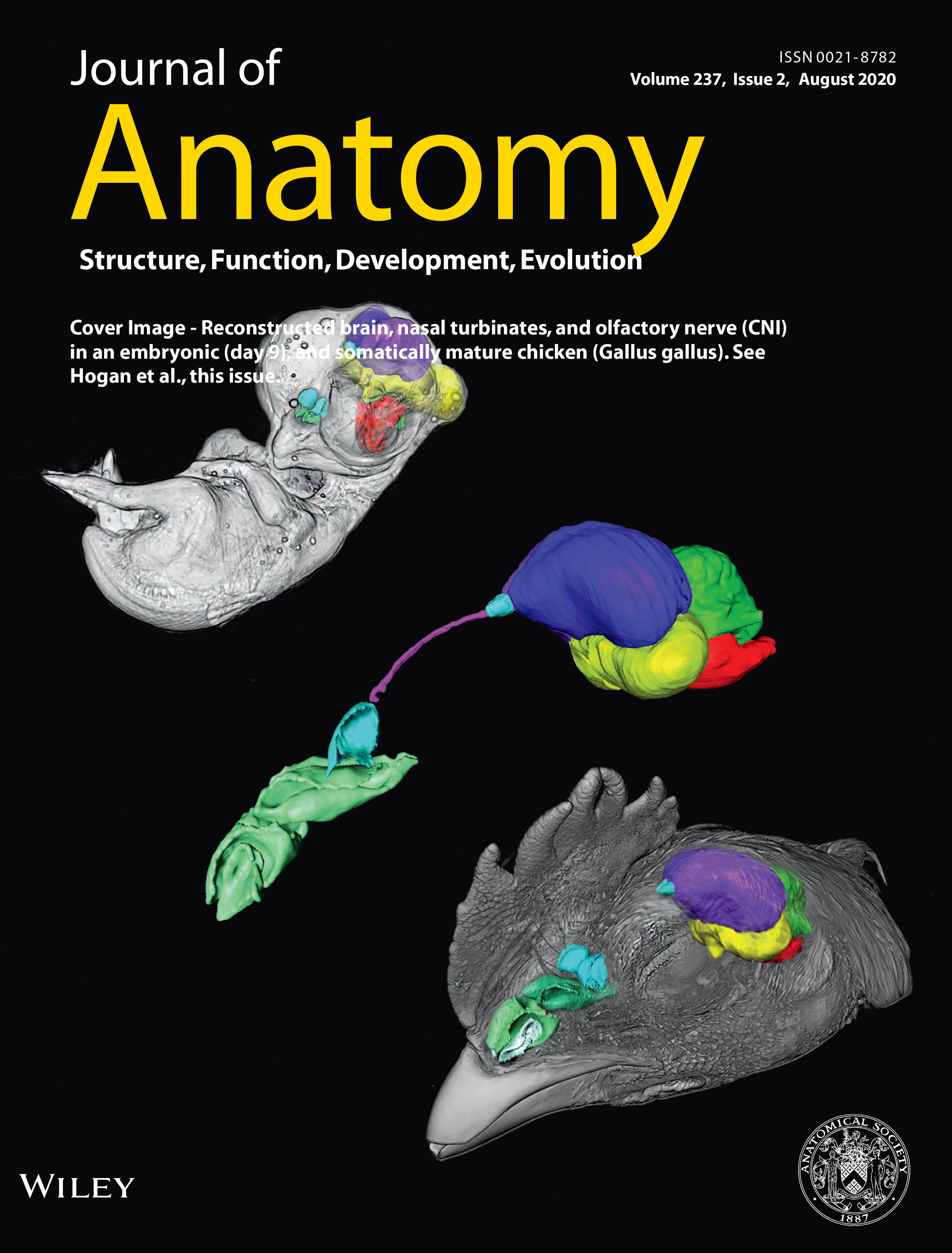 Bever Lab paper led by Aneila Hogan awarded Journal Cover