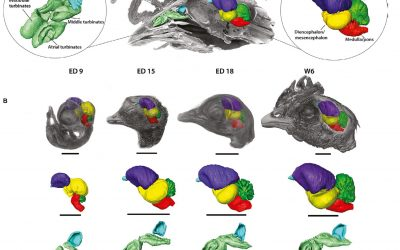 Bever Lab paper selected as a 2020 Joint Runner-Up Best Papers by Journal of Anatomy